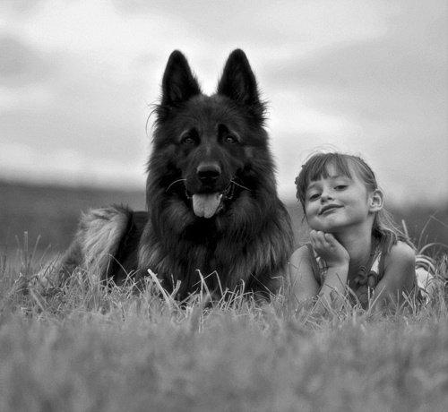 Rien ne vaut l'amour d'un chien... 217228381997639815_ucidc205_c