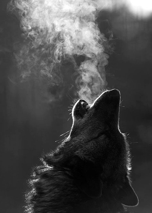 ...autant de peine en moi! wolf