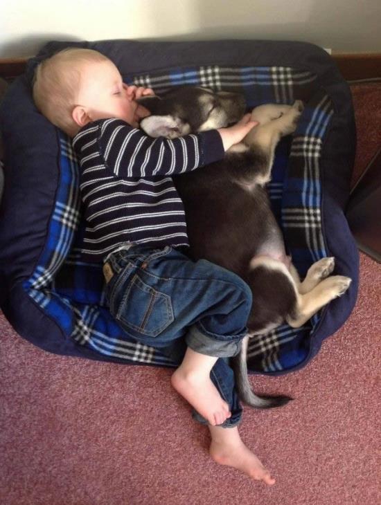 L'amour... bebe-et-chien